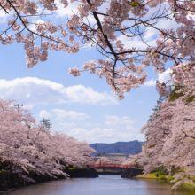 隣県に桜を見に行こう!!