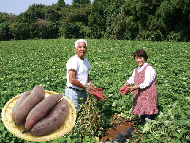 「米川さんのさつま芋・紅東(農薬不使用)」