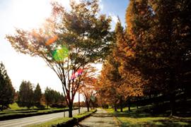 Vol.5自由なペースで楽しめる!秋を探しに、フォト散歩