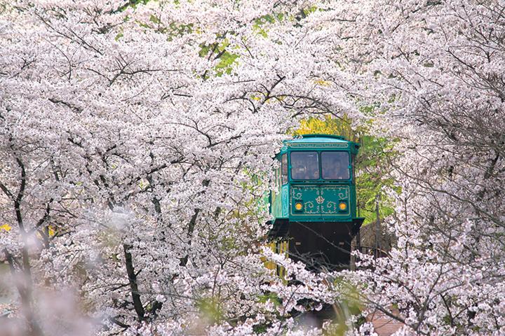 しばた桜まつりイメージ01