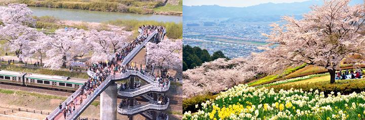 しばた桜まつりイメージ02