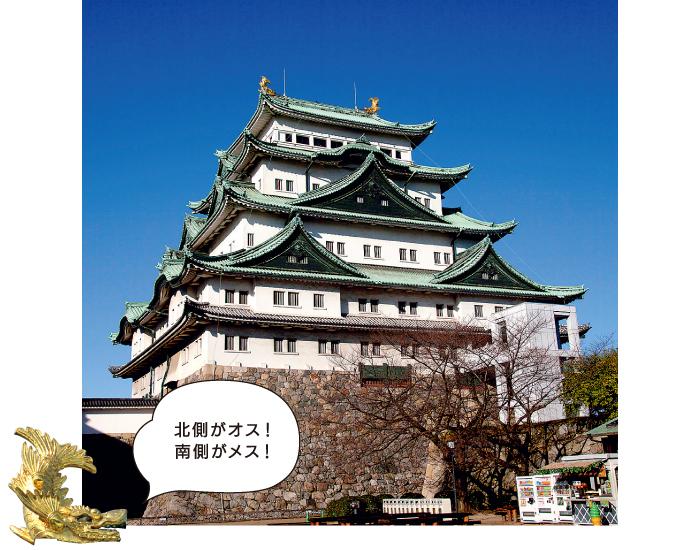 「北側がオス!南側がメス!」名古屋城