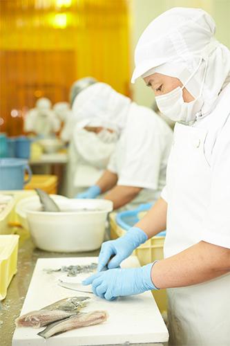 フカヒレ加工の技術