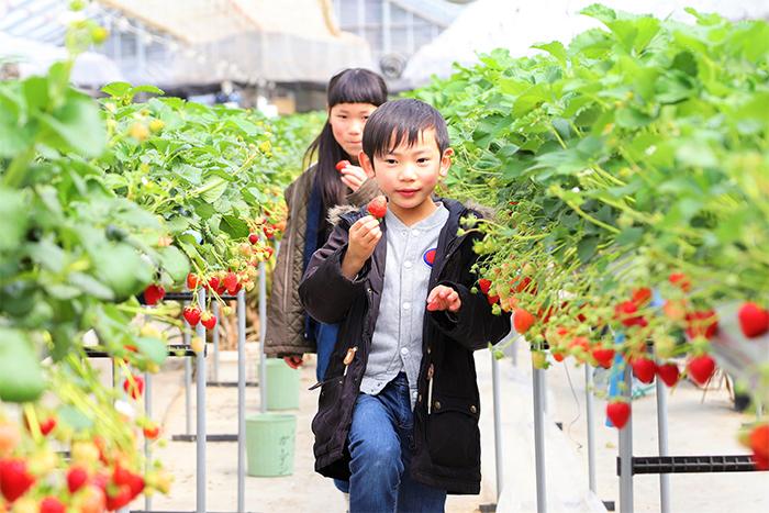 寒河江市観光いちご園「いちごガーデン」