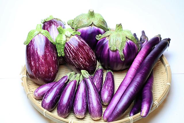 かほくイタリア野菜収穫体験01