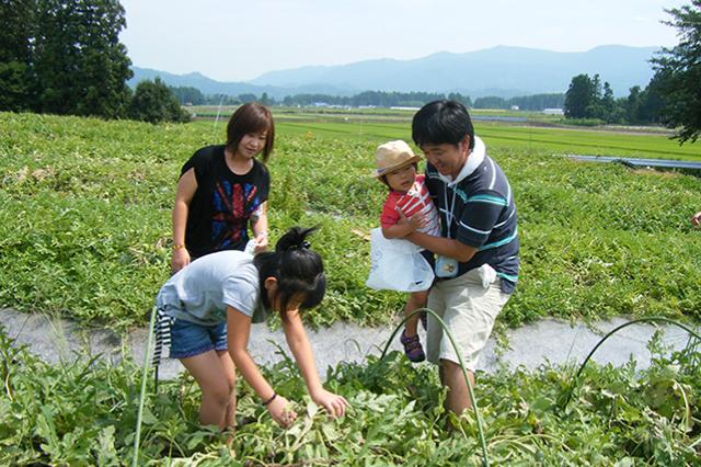 尾花沢すいか収穫体験01