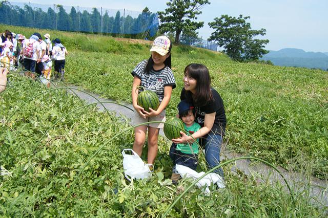 尾花沢小玉すいかと野菜収穫体験