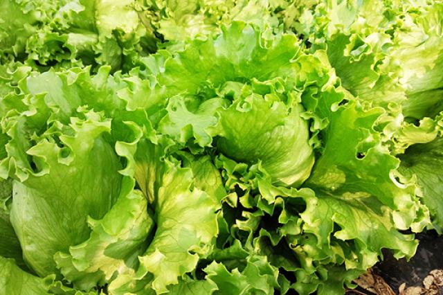 太陽の恵みをたっぷりあびた野菜たち!02