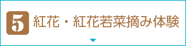 [5]紅花・紅花若菜摘み体験