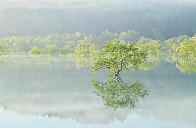 『白川湖』の水没林