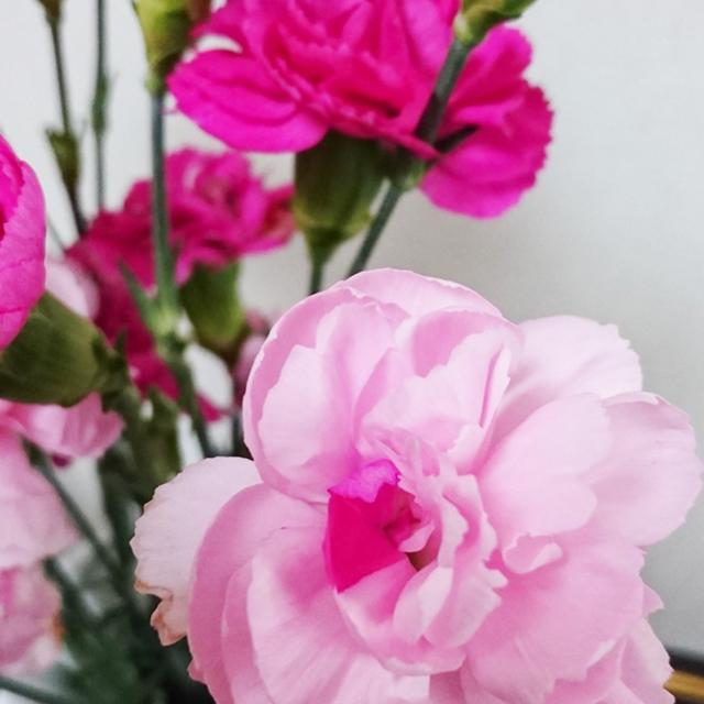 花イメージ