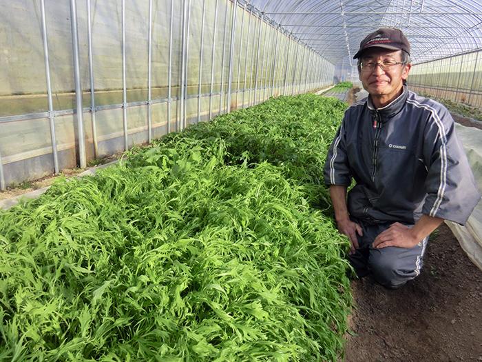 宮城県角田市 冬のお野菜収穫体験