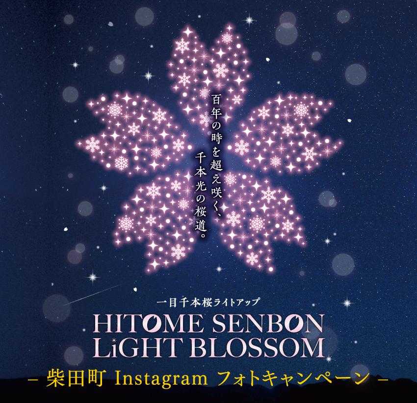 一目千本桜ライトアップ HITOME SENBON LIGHT BLOSSOM 柴田町Instagramフォトキャンペーン