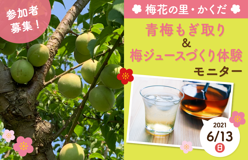 宮城県角田市 梅もぎ取り・梅ジュースづくり体験