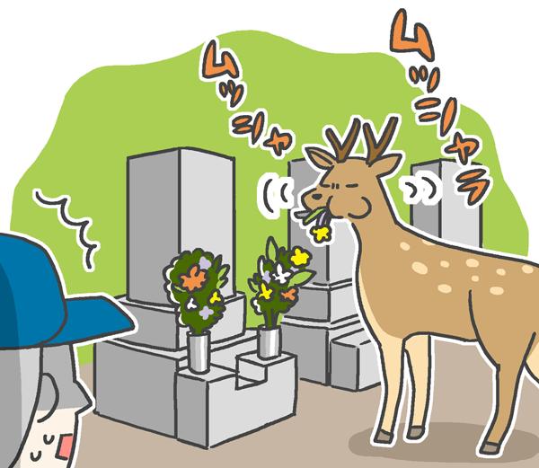 供花をムシャムシャ食べてる野良鹿